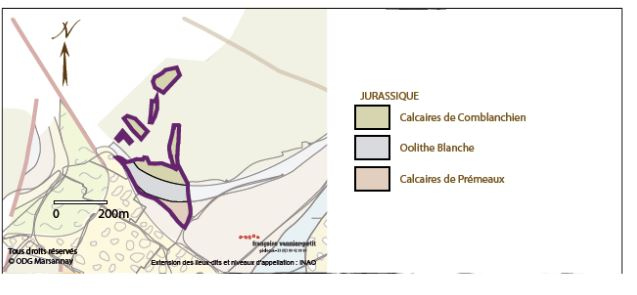 Marsannay cru of La Montagne: Against the base of the hill sits a steep face of 12% slope. Here the soil is very shallow, with compact soils, and notably geologist Vannier-Petit has identified the stone below as Comblanchien. Interestingly, Vannier-Petit doesn't show any faulting at its base, which I would have expected. I makes me wonder what the reason for this for transition of stone type, and what caused the dramatic change in elevation? Folding would explain the elevation gain, but not the change in limestone. As always, there are more questions with no answers.